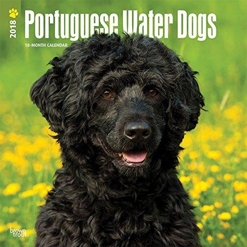 Portuguese Water Dogs - Portugiesischer Wasserhund 2018 - 18-Monatskalender mit freier DogDays-App: Original BrownTrout-Kalender [Mehrsprachig] [Kalender]