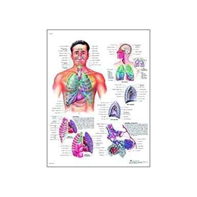 Poster Size 20 Width x 26 Height 3B Scientific VR2172L Glossy UV Resistant Laminated Paper Bassin Et Hanche Anatomie Et Pathologie Anatomical Chart Pelvis and Hip Anatomi and Pathology Chart, French