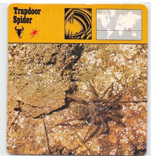 Trapdoor Spider 1975-76 Editions Rencontre Animals Card #347 (EX)