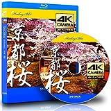 4Kカメラ映像【Healing Blueヒーリングブルー】京都・桜 SAKURA in Kyoto〈動画約45分, approx45min.〉感動の4Kカメラ映像100種収録 [Blu-ray]