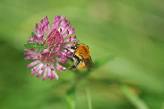 Nature's Seed 1 Acre Pacific Northwest Honey Bee Pasture Blend