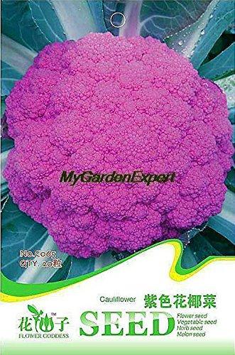 10pcs vente chaude géant potirons Graines Bonsai Seed pour fruits et légumes Graines de bricolage jardin