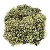 Glorex 6 3803 606 - Islandmoos, 50 g, dunkelgrün, zum Basteln, Dekorieren, für den Modell- und Krippenbau