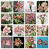 Bulbos Amarilis,Adecuado Para Plantar Al Aire Libre,Hermosos Colores, Flores Y Macizos De Flores, Colores Brillantes, Hermosas Flores,-4 Bulbo,1