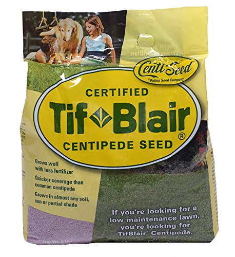 Tifblair centipede grass seed (5 lb. ) direct from the farm