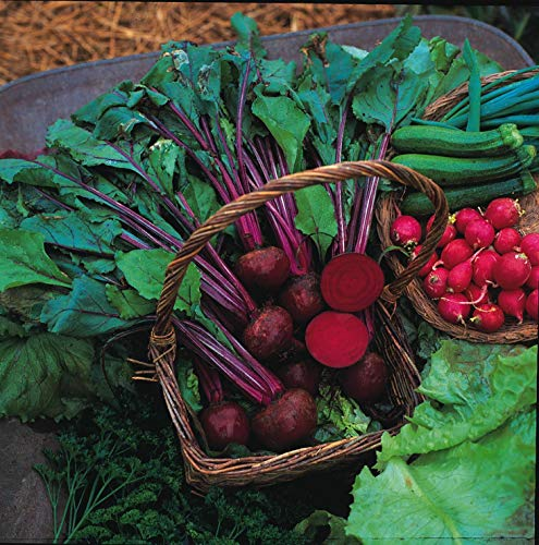 200 Seeds of Vegetable Beetroot Boltardy