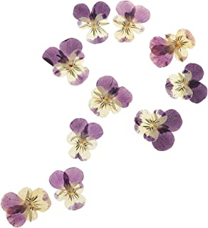 Baoblaze 10 Pieces 3-5.5 cm/1.18-2.17 inch Mini Real Pressed Dried Pansy Flower For Resin Jewelry Pendant Bracelet Phone Case Scrapbooking Arts & Crafts DIY Cards Making