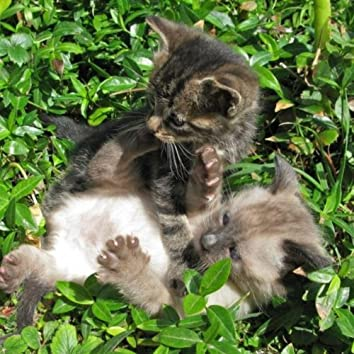 Kitty Cat Daydream