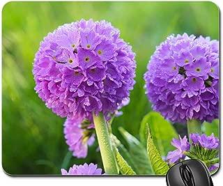 Mouse Pad - Flower Purple Primrose Flower Pr mula Denticulata
