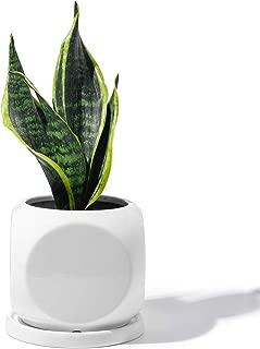 Best square glazed garden pots Reviews