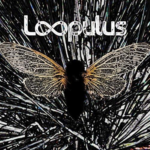 Loopulus