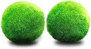Luffy Giant Marimo Moss Balls, 1.5 Inches, Aesthetically Beautiful and Create Real..
