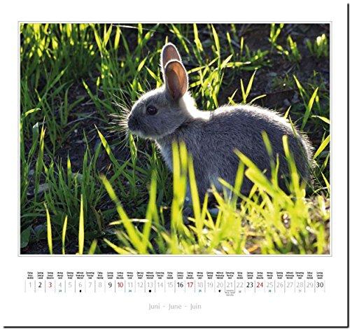 KANINCHEN: Original Stürtz-Kalender 2018 – Mittelformat-Kalender 33 x 31 cm - 8