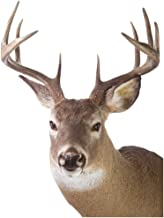 ColorBok Joy Riders Deer Window Cling