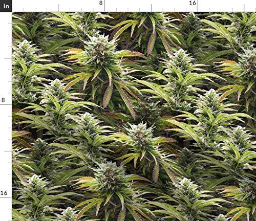 Marihuana, Cannabis, Knospen, Haschisch,...