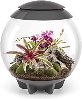 biorb air terrarium plants