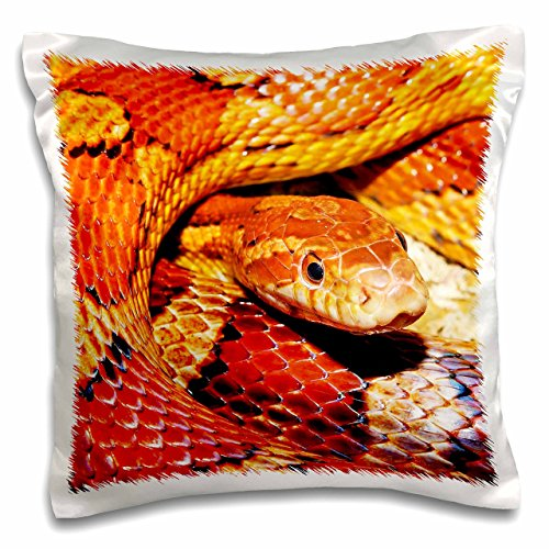 "3dRose Corn Snake. Popular Image.-Pillow Case, 16 by 16"" (pc_216465_1)"