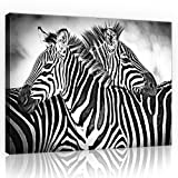 welt-der-träumewandbild canvasbild lienzo impresión lienzo   Zebra Blanco y Negro     lienzo 10159_ pp-ms   naturaleza salvaje vida salvaje Animal Animales Cebra Cebras, O1 (100cm. x 75cm.)
