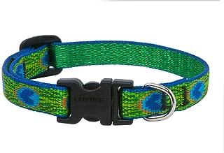 feather dog collar
