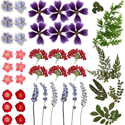 Flores Prensadas Secas Reales Flores Hojas Secas Coloridas Flor Seca Natural Múltiple para Bricolaje Fabricación Resina Epoxica Manualidades Joyería Colgante Uñas Decoración