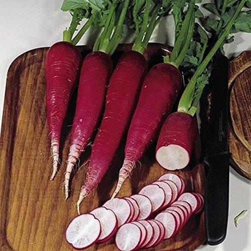 PLAT FIRM Germination Les graines: 100 - Graines: Ostergruss Rosa 2 Radis Seeds - longues racines effilées dans une belle rose rose !!