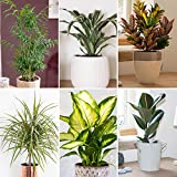 Indoor Plants Review and Comparison