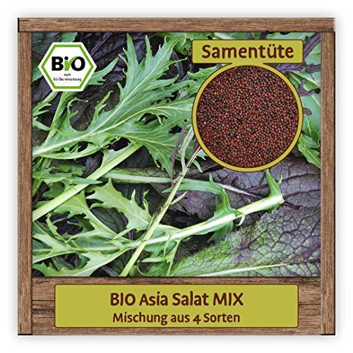 BIO Asia Salat Samen Mix Pflücksalat Asiasalat (Mischung aus 4 Sorten) Gemüsesamen Salat Mischung ganzjährig & winterhart
