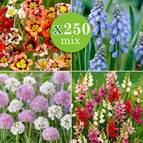 250x Blumenzwiebeln Mix