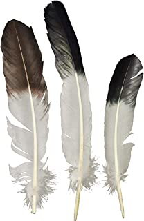 Eagle Tip Feather White and Black