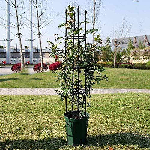 ZXL Obelisk Climbing Plant Support, Garden Trellis, Metal Plant Supports for Potted Plants, Frame Trellis, Garden Support Stake, Plant Support Ring Cage for Rose, Flowers Vine