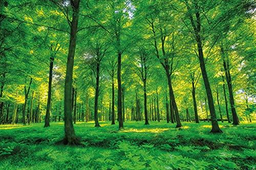 GREAT ART® Fototapete – Bäume – Wandbild Dekoration Natur pur Landschaft Wald Lichtung Sommer Entspannung Sonne Pflanzen Flora Forst Farne Ast Foto-Tapete Wandtapete Fotoposter Wanddeko (210x140 cm)