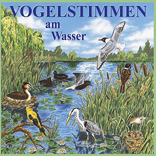 Vogelstimmen am Wasser Titelbild
