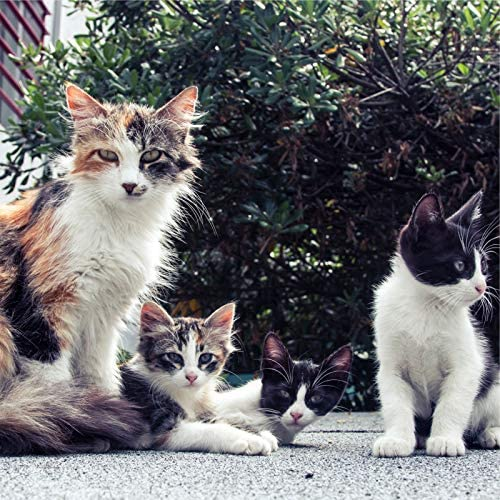 Music for Relaxing Cats, Music for Resting Cats & Music for Cats Project