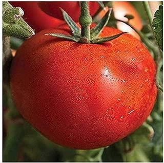 David's Garden Seeds Tomato Slicing Early Girl SL5329 (Red) 25 Non-GMO, Hybrid Seeds