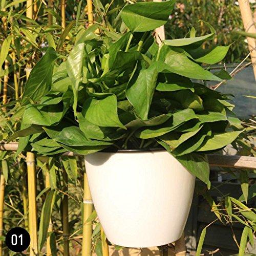 ZHUOTOP - Pot de fleurs mural à suspendre - 11 cm - En plastique - Auto-arrosage - Décor de jardin