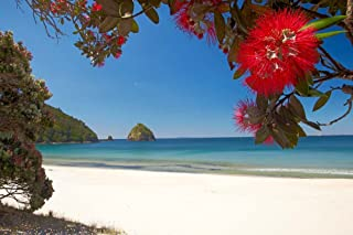 Pohutukawa Tree in Bloom and New Chums Beach, North Island, New Zealand by David Wall/Danita Delimont Art Print, 41 x 27 inches