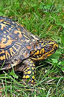 Best tortoise drawing colour Reviews