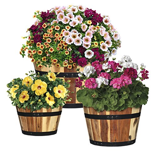 Classic Home and Garden 5/800/3 Wood Barrel Set of 3 Planters, 1 Pack, Acacia