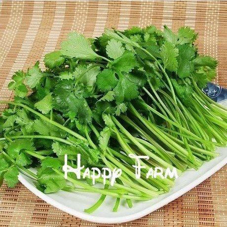 Semences de légumes balcon graines de persil quatre grandes saisons peuvent pousser les graines de coriandre Bonsai plantes Semences pour la maison et le jardin - 100seeds