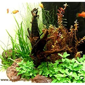 Mühlan - Wasserpflanzensortiment für ein Kinderaquarium, bunt, pflegeleicht, robust, inkl. Dünger