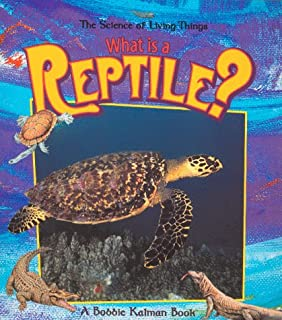 Best is a hippo a reptile Reviews