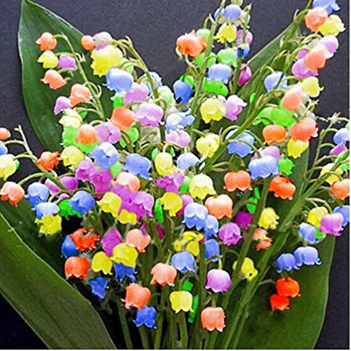 Blumensamen Maiglöckchen SummerRio Bonsai Blumen Samen Garten Blumen Saatgut Balkon 100 Stücke