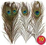 Baker Ross Plumes de paon naturelles que les enfants et adultes pourront utiliser pour leurs collages et autres créations - Décoration spéciale masque pour fête costumée (Lot de 10)