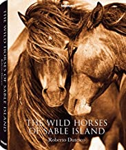 The Wild Horses of Sable Island (Photography)