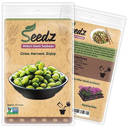 Organic Giant Soybean Seeds, APPR. 30, Midori Giant Soybean, Heirloom Vegetable...