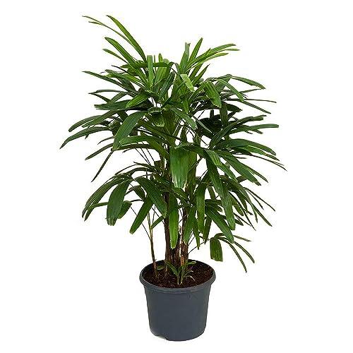 Indoor House Plants: Amazon.com on