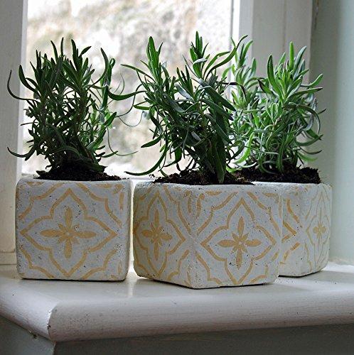 Lot de 3 petits en céramique Orange Soho Pot de fleurs