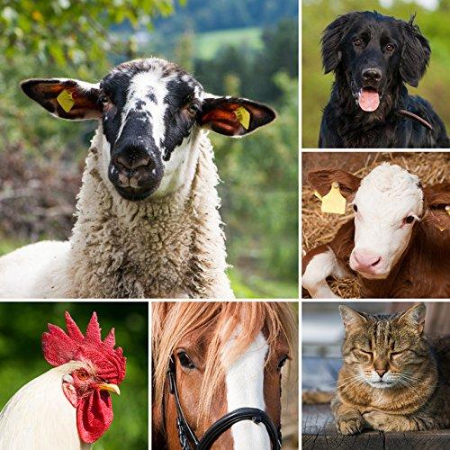 NeemPro Tierpflege 100 ml für gepflegtes Fell Haustier Pferd Shampoo mit Margosaextrakt Neem ohne Auswaschen - 3