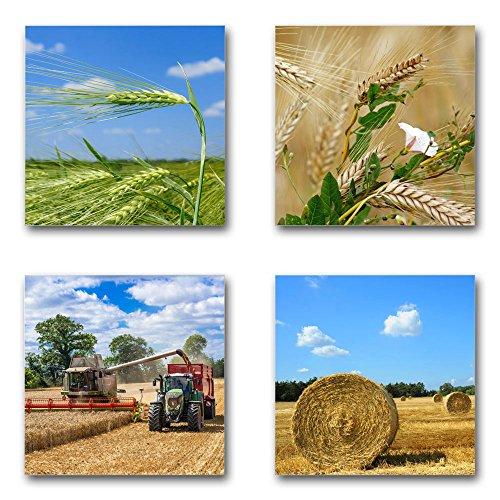 Getreide Ernte - Set B schwebend, 4-teiliges Bilder-Set je Teil 29x29cm, Seidenmatte Moderne Optik auf Forex, UV-stabil, wasserfest, Kunstdruck für Büro, Wohnzimmer, XXL Deko Bild