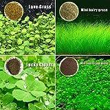 ミニ多毛草:2C2EフォアグラウンドガーデンMa1の小さな 水草の種子